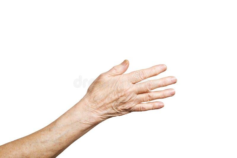 Língua de gesto fêmea superior, sinais das mãos isolados no fundo branco contínuo Fêmea idosa em seus anos setenta/anos 80 que mo fotos de stock