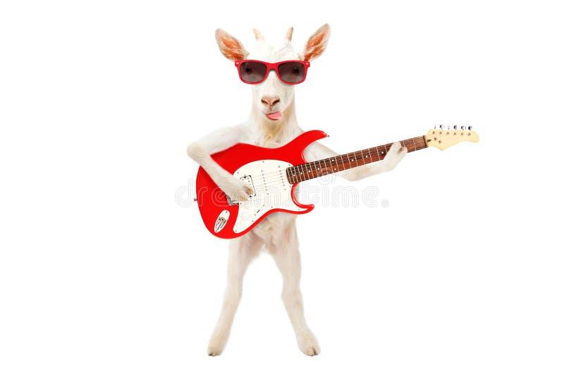 Língua engraçada da exibição da cabra nos óculos de sol que estão com guitarra elétrica imagens de stock