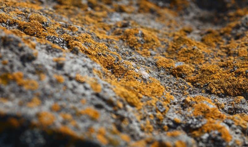 Líquene e paisagem do macro da pedra imagem de stock