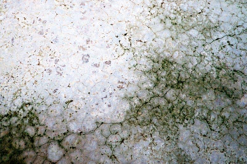 Líquene verde do musgo no assoalho cinzento do cimento da quebra velha foto de stock royalty free