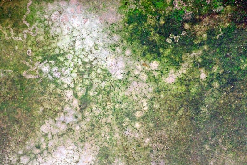 Líquene verde do musgo no assoalho cinzento do cimento da quebra velha foto de stock