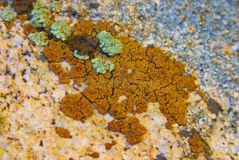 Líquenes coloridos em pedras em Sierra Nevada imagem de stock royalty free
