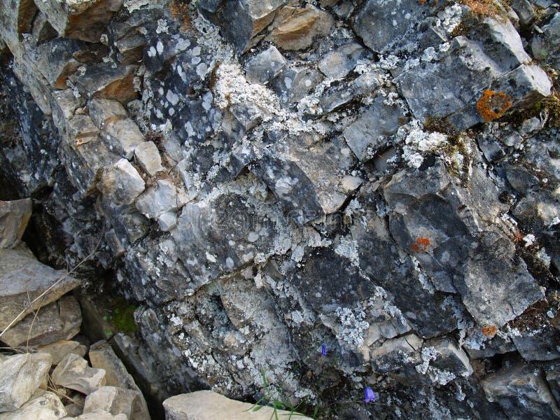 Líquenes e musgos em pedras (Lena Pillars, Yakutia) imagem de stock royalty free