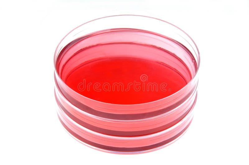 líquido e prato de petri em um laboratório fotografia de stock