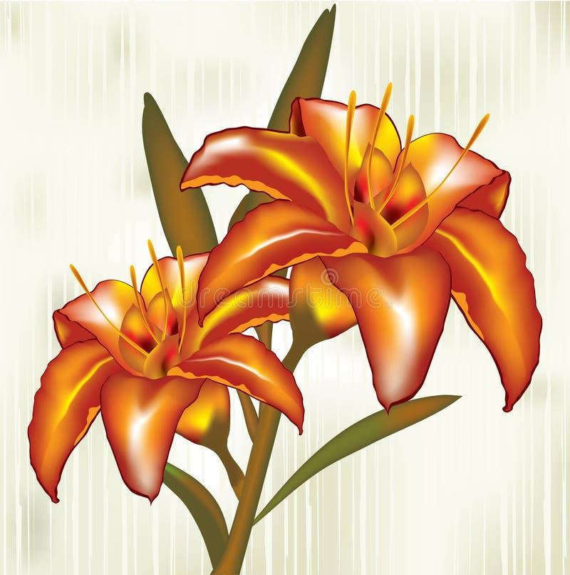 Download Lírio ilustração do vetor. Ilustração de flor, alaranjado - 26512204