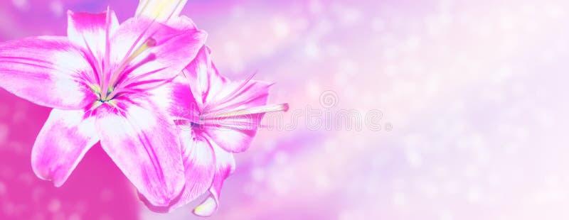 Lírio bonito das flores no fundo da paisagem do verão imagem de stock