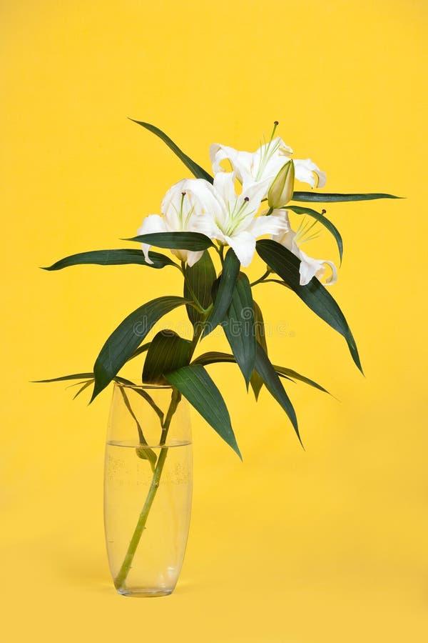 Lírio branco no vaso foto de stock royalty free