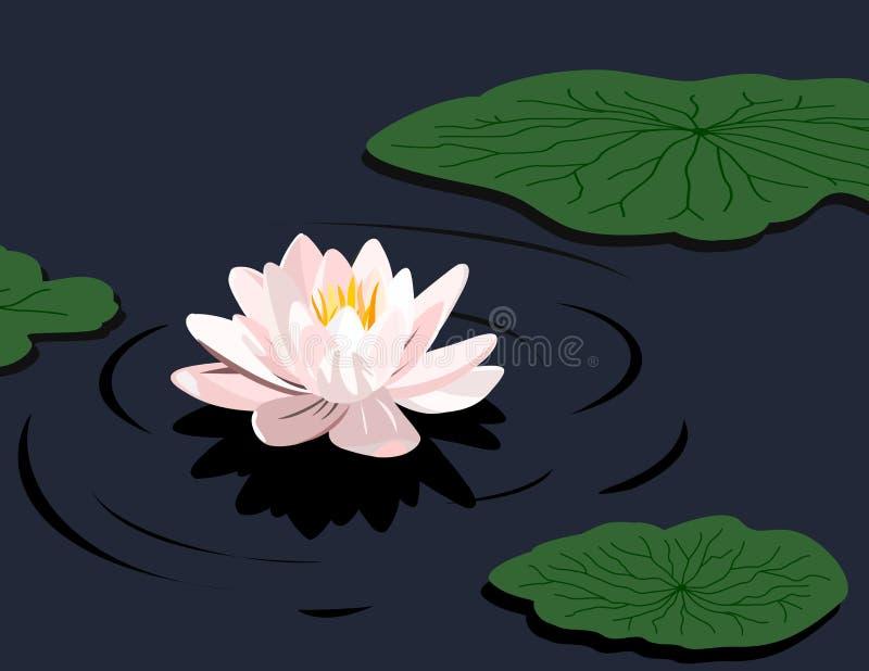 Lírio de água ilustração royalty free