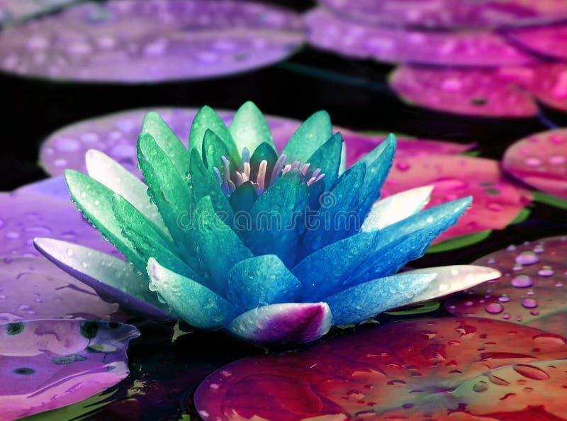 Lírio de água colorido imagens de stock royalty free