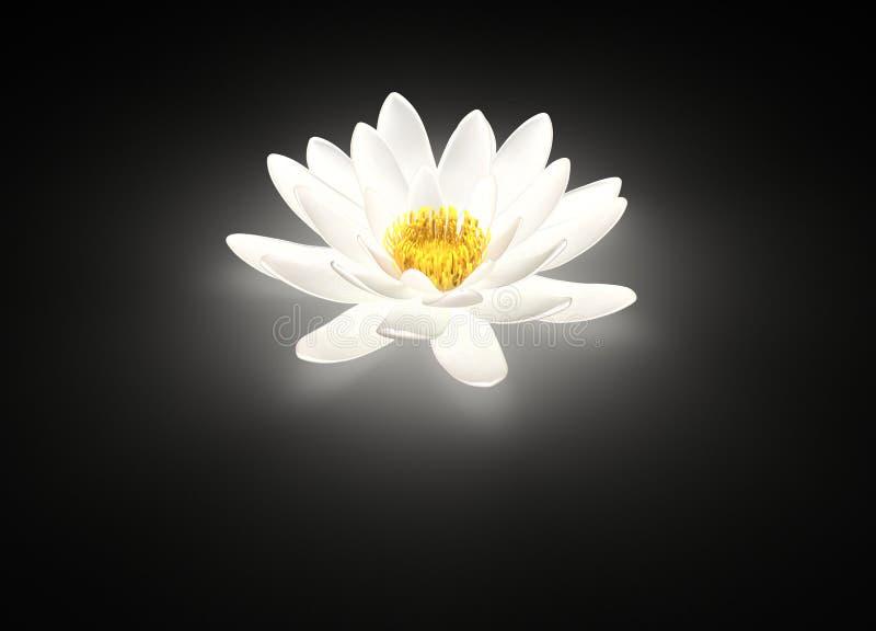 Lírio de água de incandescência da flor de lótus brancos fotografia de stock