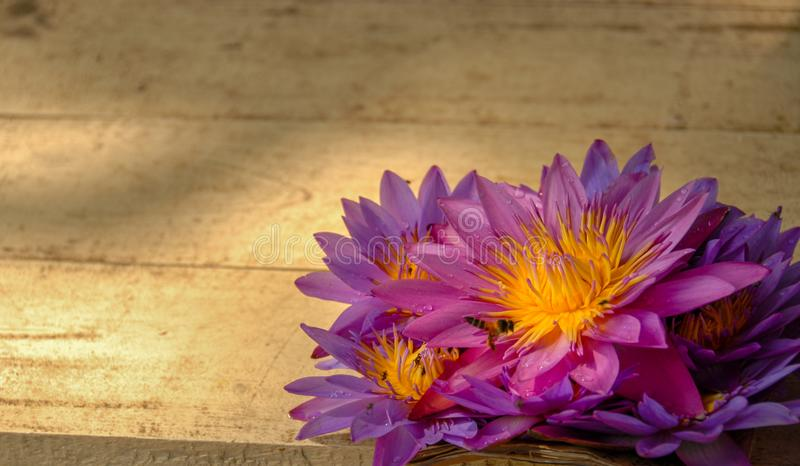 Lírio de água violeta e amarela em um fundo da placa de madeira fotografia de stock royalty free