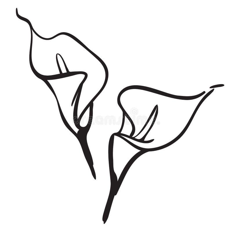 Lírio de Calla ilustração royalty free