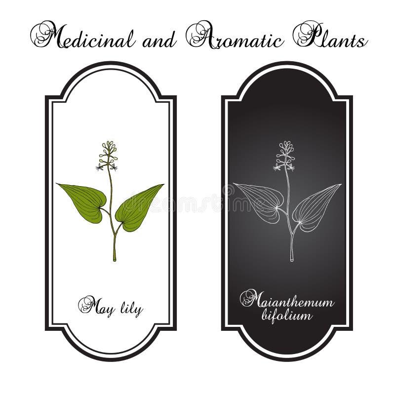Lírio falso do vale, planta medicinal ilustração royalty free