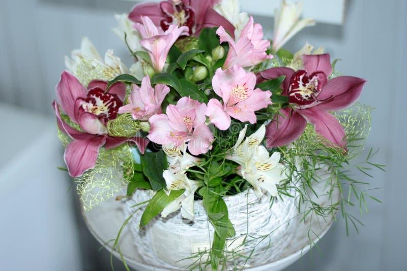 Lírio peruano, lírio dos Incas, Alstroemeria com luz - flores cor-de-rosa foto de stock