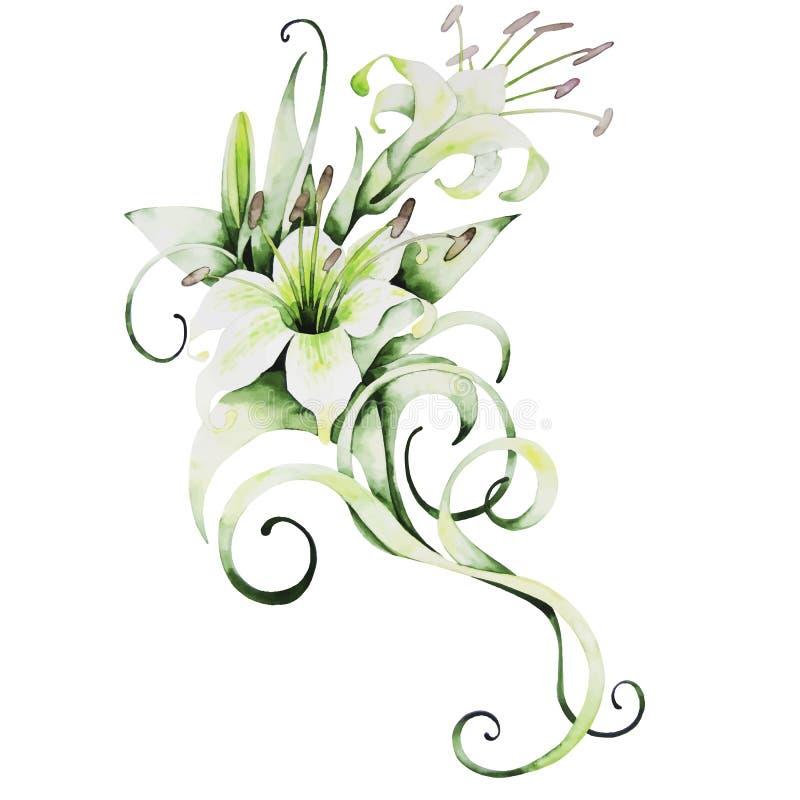 Lírios brancos da aquarela ilustração royalty free