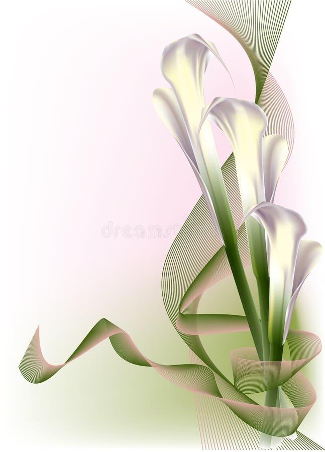 Lírios de calla brancos bonitos ilustração royalty free