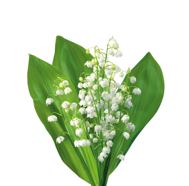 Lírios de flores brancas do vale isolado no branco fotografia de stock