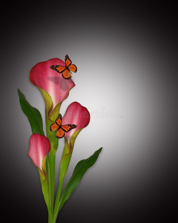 Lírios e borboletas de Calla ilustração do vetor