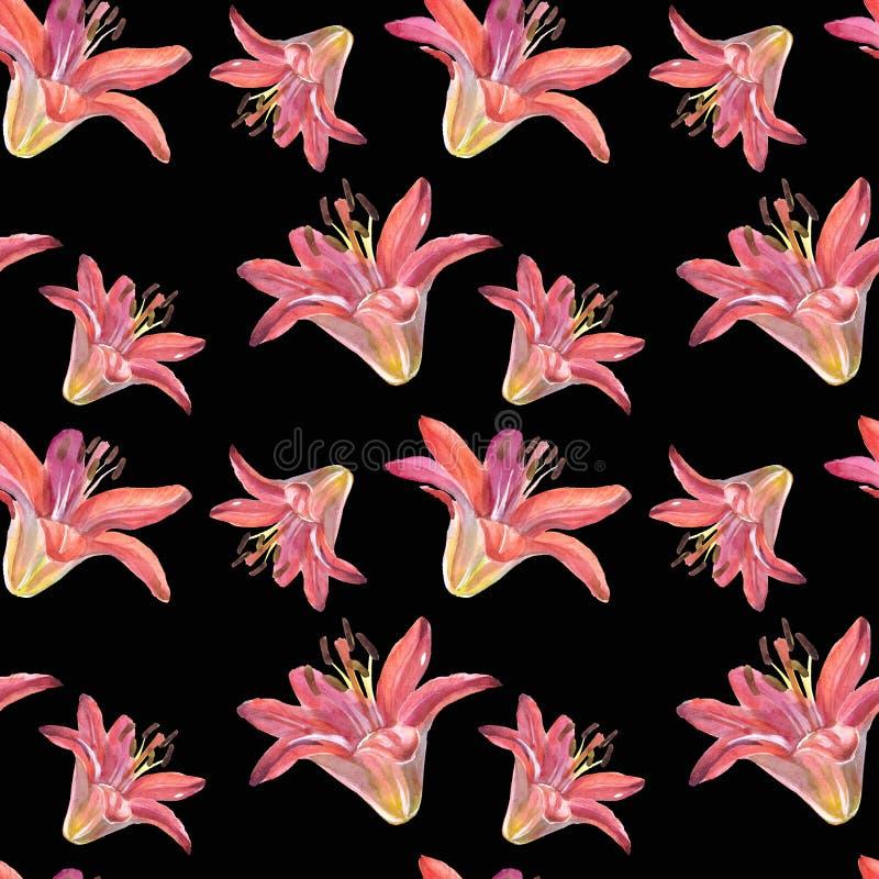 Lírios elegantes, um grupo de flores vermelhas e cor-de-rosa em um fundo preto isolado, ilustrações da aquarela, coleção fotos de stock