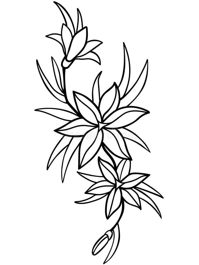 Lirios Flores Com Folhas A Lapis Desenho Para Colorir Ilustracao