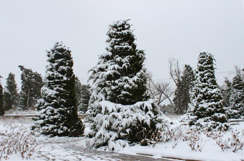 Lód i śnieg zakrywaliśmy wiecznozielonych drzewa przeciw zimy niebu fotografia royalty free