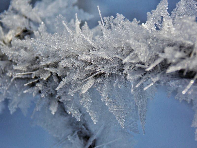 Lód na drzewie obraz royalty free