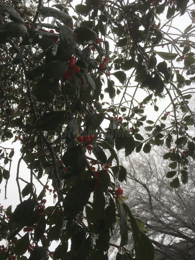 Lód na uświęconym drzewie obrazy stock