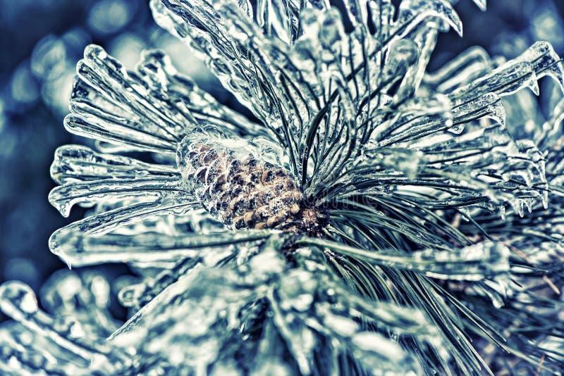 Lód Zakrywać sosen igły i sosna rożek - Retro obrazy stock
