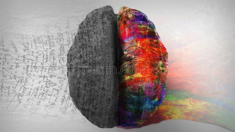 Lógica contra Faculdade criadora - lado direito/lado esquerdo do cérebro humano imagem de stock royalty free