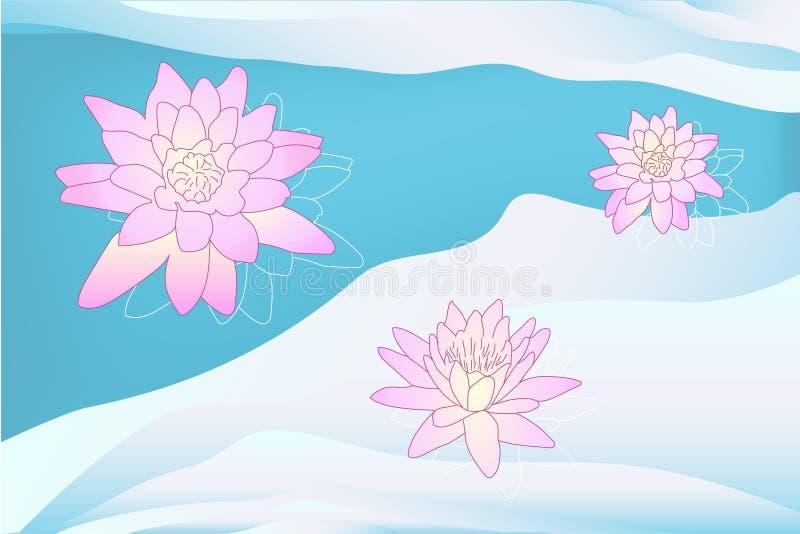 Lótus coloridos do vetor na cor cor-de-rosa da água azul ilustração royalty free