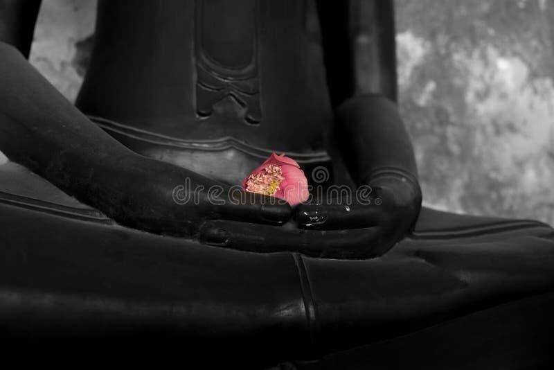 Lótus cor-de-rosa à disposição da estátua de buddha fotografia de stock royalty free