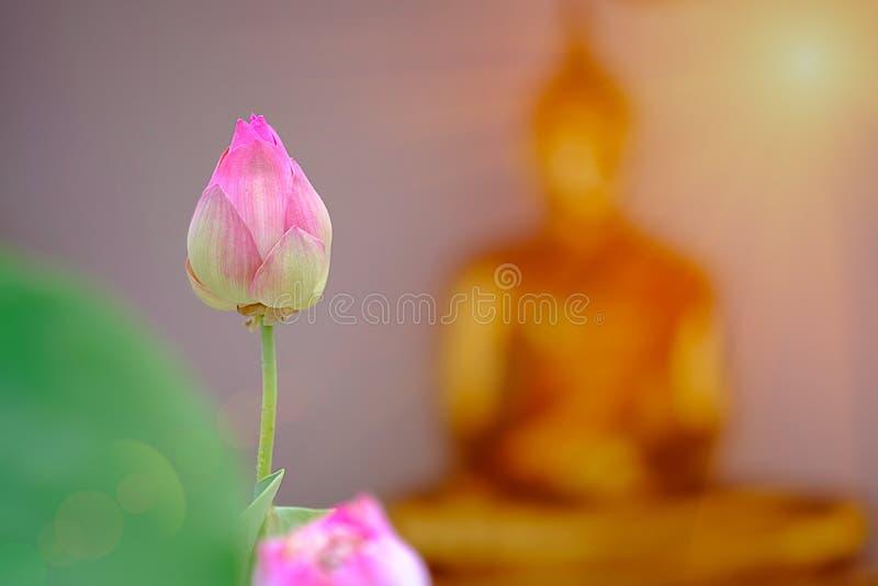 Lótus cor-de-rosa com backgroud borrado do ouro de buddha fotos de stock royalty free