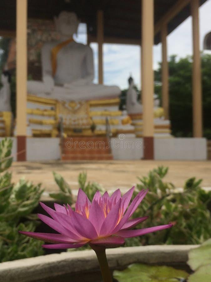 Lótus cor-de-rosa ou waterlily e fundo com imagem de buddha imagem de stock royalty free