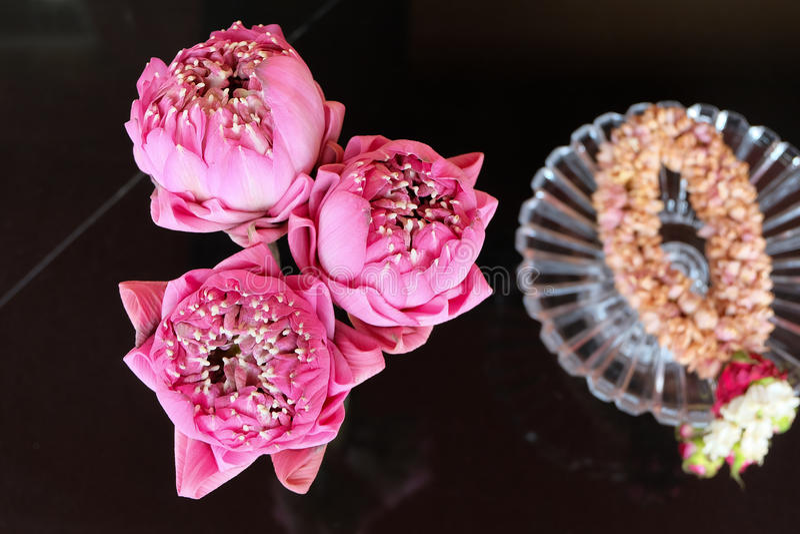 Lótus cor-de-rosa para a adoração fotografia de stock
