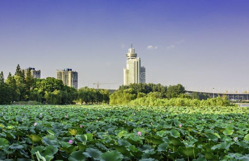 Lótus do lago Xuanwu imagem de stock