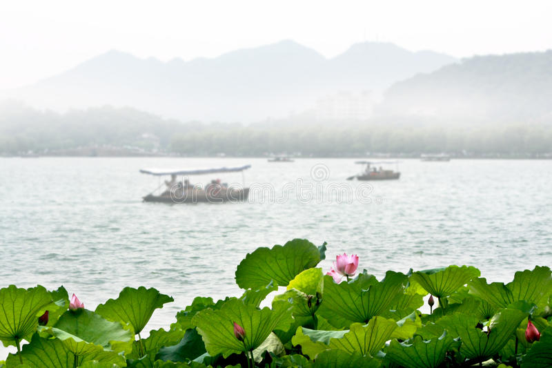 Lótus no lago ocidental, Hangzhou fotografia de stock