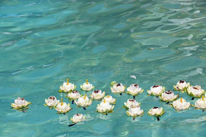 Lótus que flutuam na água fotos de stock