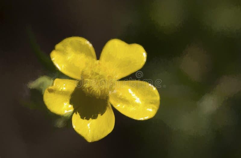 L?kformig sm?rblomma - Ranunculusbulbosusvildblomma royaltyfri foto