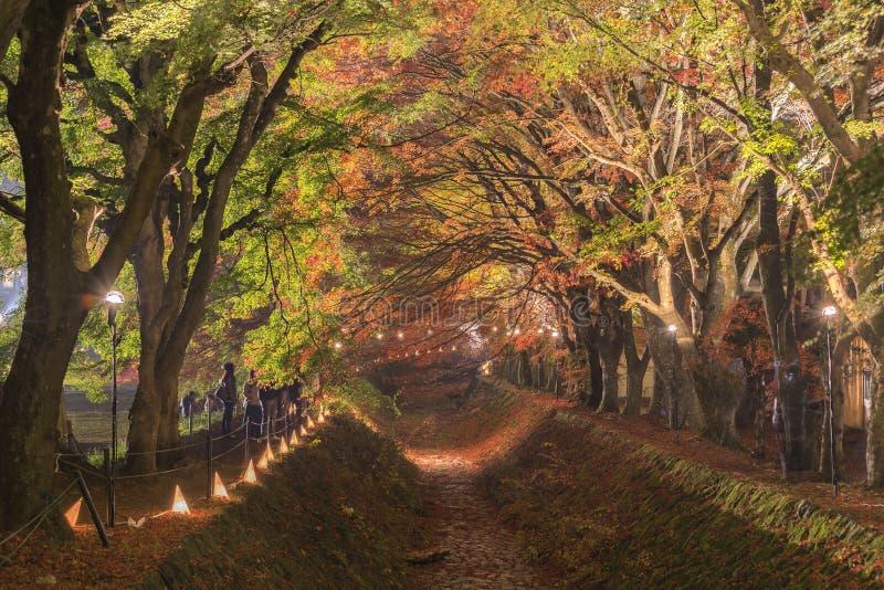 Lönnkorridor på den Nashigawa floden, Japan arkivbild