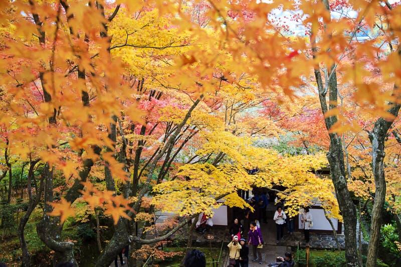 Lönnsäsong på nedgången, Japan fotografering för bildbyråer