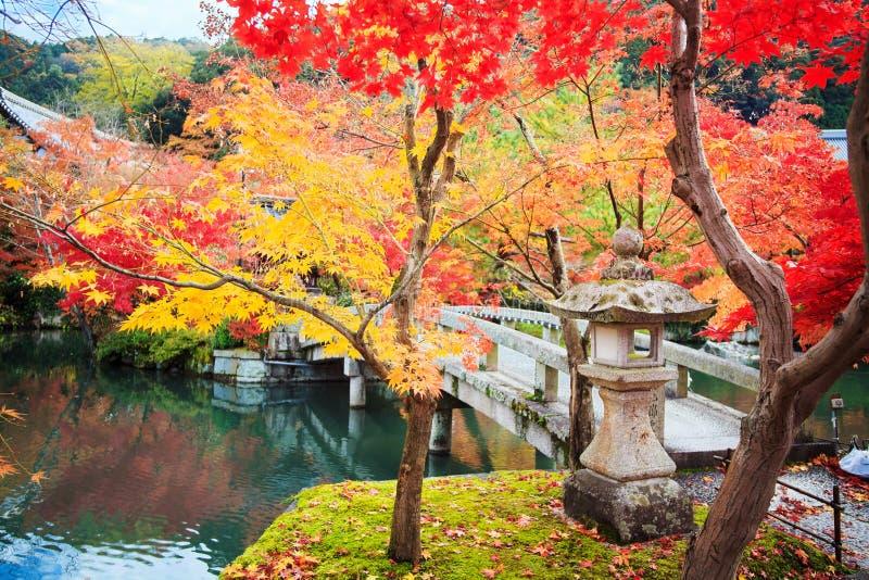 Lönnsäsong på nedgången, Japan royaltyfri foto