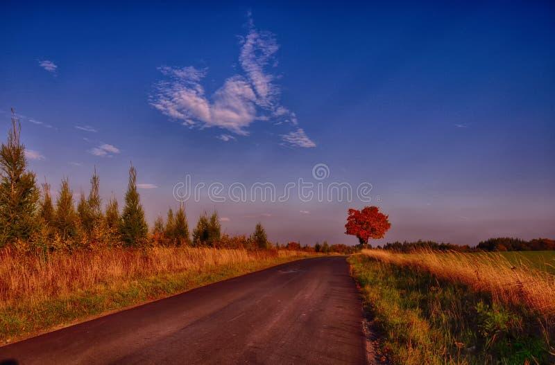 Lönnträd med färgade blad längs asfaltvägen på hösten/nedgångdagsljus royaltyfri foto