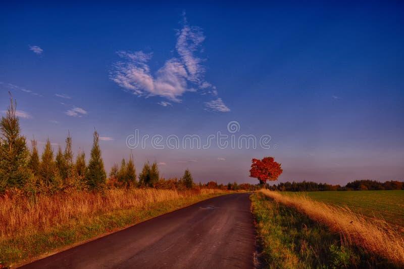 Lönnträd med färgade blad längs asfaltvägen på hösten/nedgångdagsljus arkivbild