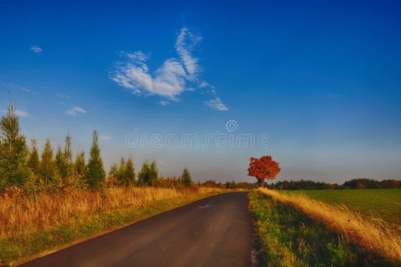 Lönnträd med färgade blad längs asfaltvägen på hösten/nedgångdagsljus royaltyfria foton