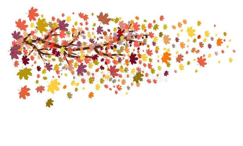 Lönnträdfilialen med den färgade hösten lämnar att falla av/illustrationen för höstlövverkvektor på vit bakgrund med utrymme för  vektor illustrationer