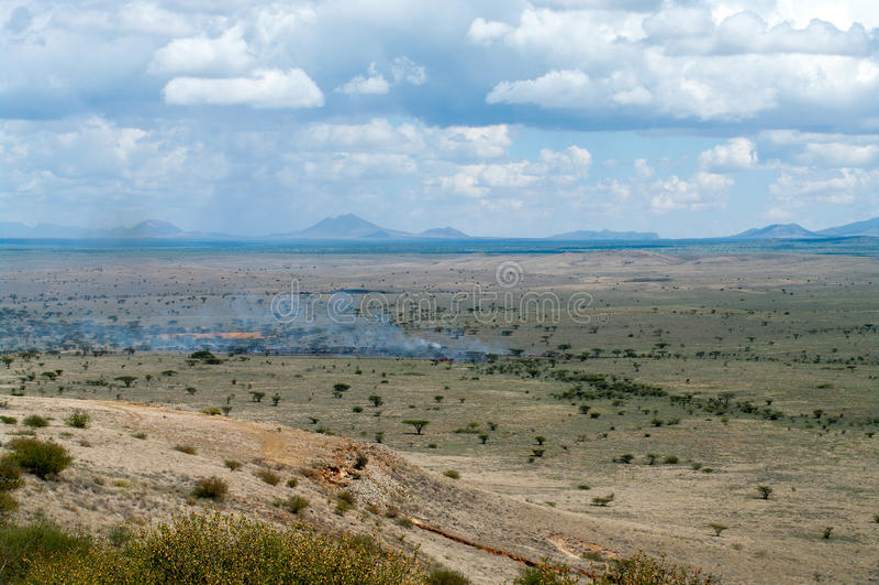 Löpeld i afrikansk savann arkivfoto