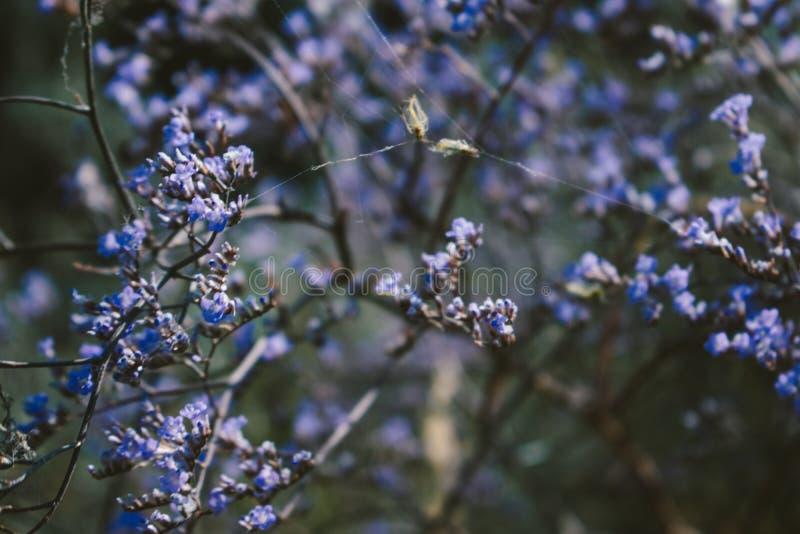 Lös ört i fältet blommar purpurt litet medicinal växt för illustrationsky för fjärilar grön vektor för tema för sommar Naturli arkivfoton