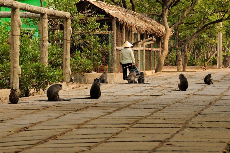 Lös apaö Vietnam arkivbilder