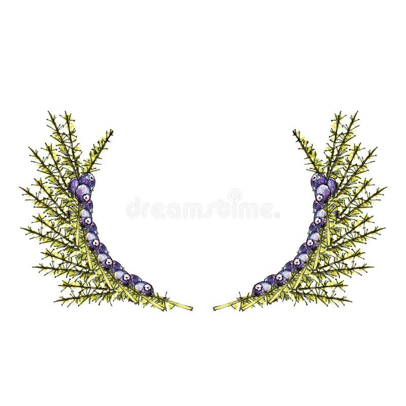 Lös bärram för vattenfärg royaltyfri illustrationer
