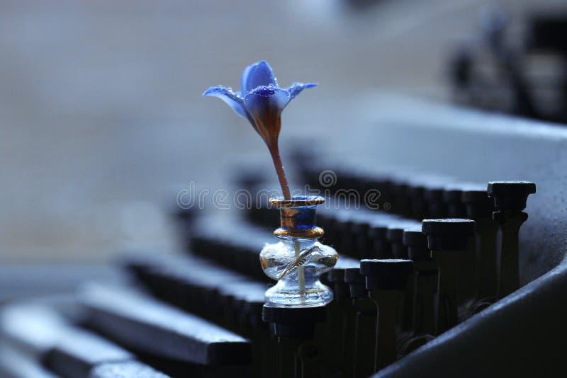 Lös blomma för blå vår arkivfoto